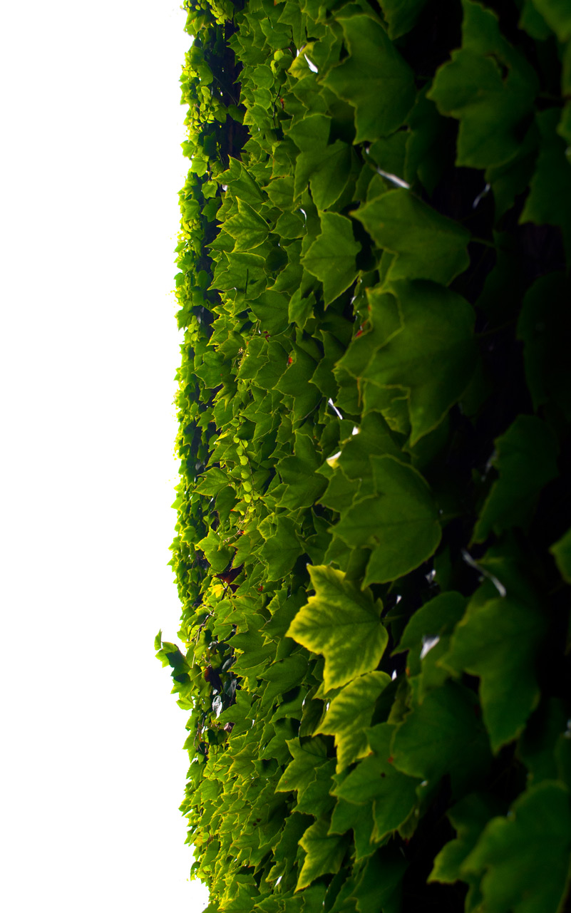 Photo: Green Wall