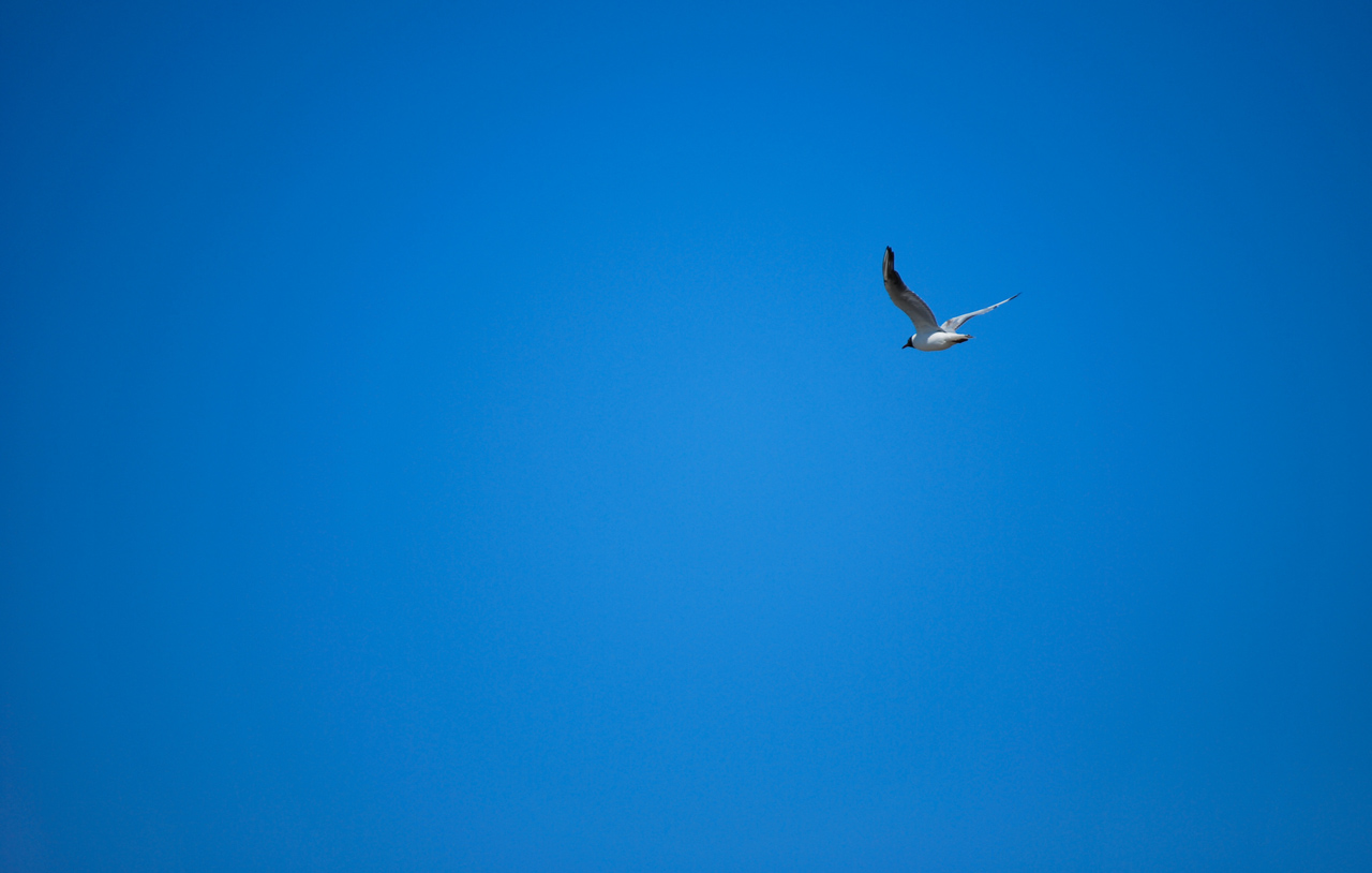 Photo: Fly Away