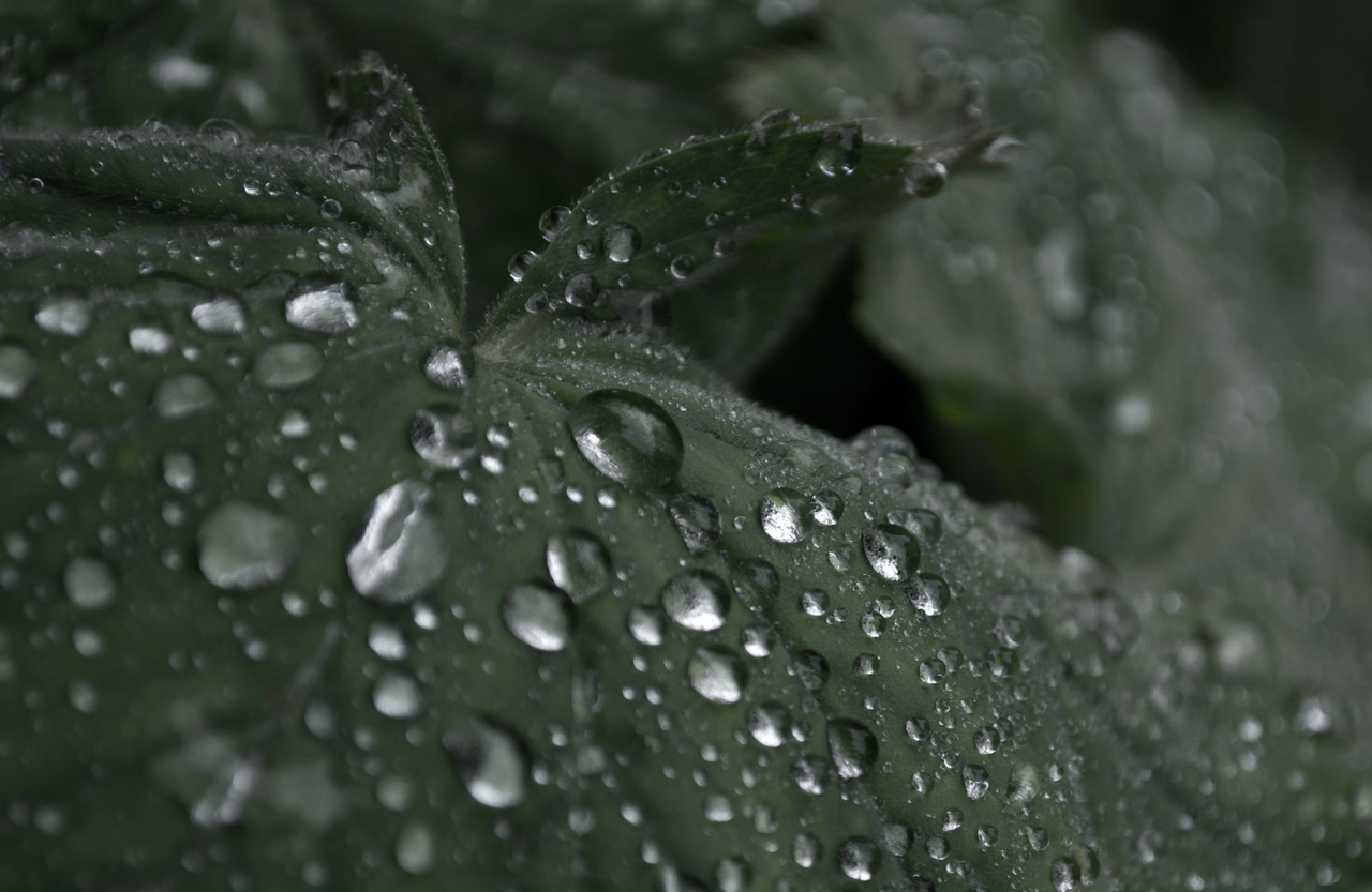 Photo: Morning Dew